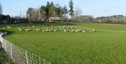postWattenpaugh-Farm