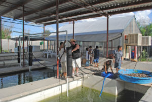 : A view of an aquaponics facility in Mexico built with help from Aquaponics & Earth (photo taken by Teresa  Musser)