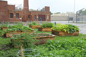 Urban Farm.at Detroit's former Kettering High School. Image courtesy of Betti Wiggins