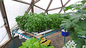 (photo courtesy of Michael McNair/New Mexico Aquaponics Association)