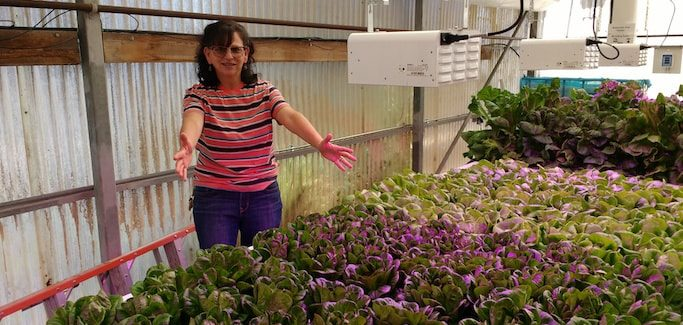 Community College Hort Professor Prepares Students to Work in Indoor Greenhouses of the Future