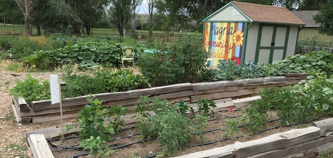 Local Government Support Bolsters Urban Farming Movement in Salt Lake County, UT