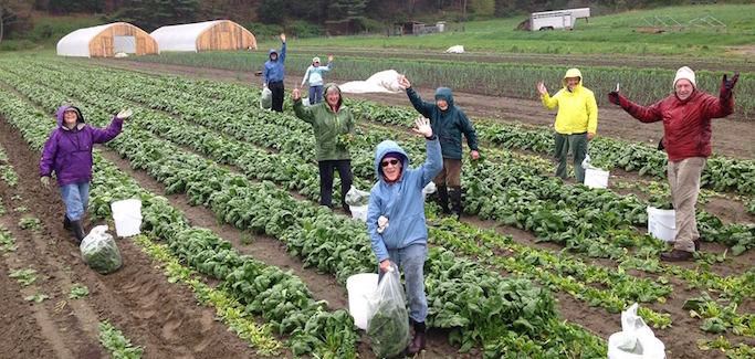 In Battle Against Food Waste, Gleaning Org Develops Workforce to Process Unused Produce