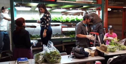 Urban Agriculture Students at Santa Fe Community College learn about hydroponics and aquaponics. A new aquaponics facility is on the horizon for the college.(photo courtesy Adam Cohen/Santa Fe Community College)