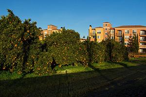 San Jose Urban Orange Farm by Don McCullough