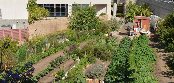 Downtown San Diego City College Farm 'Not for Hobby Gardeners'
