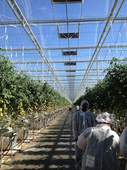 Attendees touring Houweling's Tomatoes on day one of the Seedstock Sustainable Agriculture Innovation Conference.