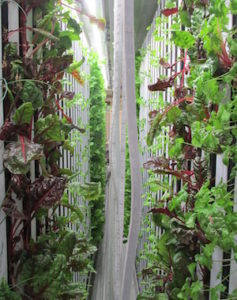 freight farm hydroponic lettuce Wyoming farm