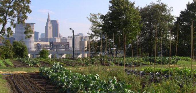 Six Powerhouse Food Policy Councils Driving Local Food in Cities