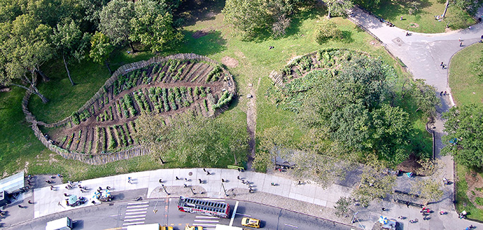 Growing Food and Farmers in Manhattan