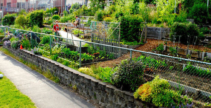 sliderBuckman-Community-Garden
