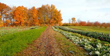 sliderFields-at-Michigan-State-University's-organic-farm