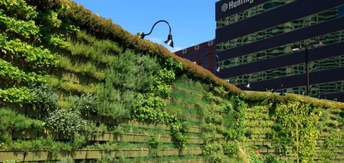 Canadian Nonprofit Keeps Rooftops Green in North American Cities