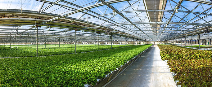 Go Green Agriculture Pioneers Large Scale Organic Hydroponics