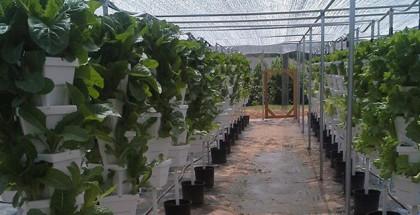 sliderHarvest-Farms-7-3
