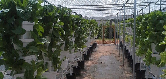 Tennessee Church Finds Ministry in Hydroponic Farming