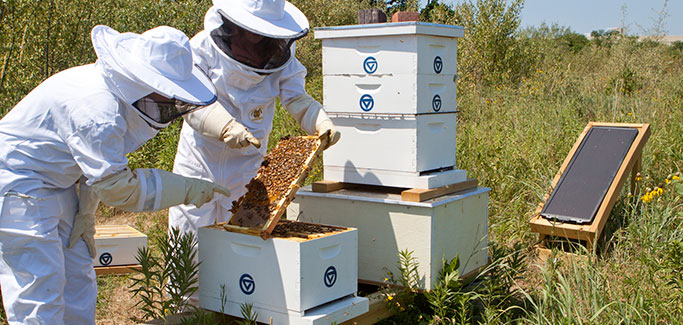 Students Develop Commercial Hive Sensor, Allow Keepers to Bee Informed of Bee Health