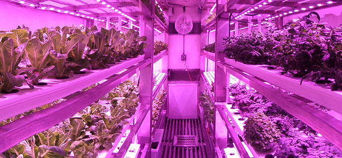 Growtainer Refocuses on Stainless Steel Rack System for Affordable, Scalable Indoor Ag