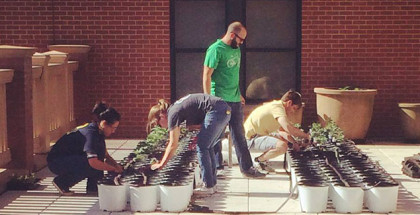 sliderThe-Station-2014_tomato-planting
