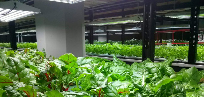 Startup Converts Former Twin City Brewery Building to Aquaponic Facility