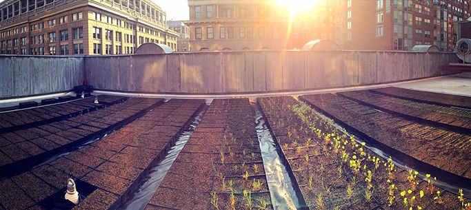 D.C.'s First Commercial Rooftop Farm Opens