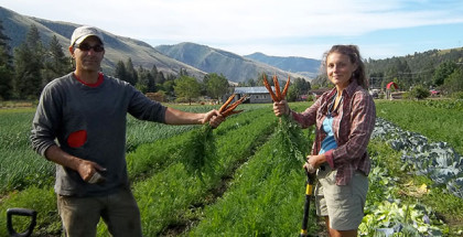 sliderUniversity-of-Montana-carrots
