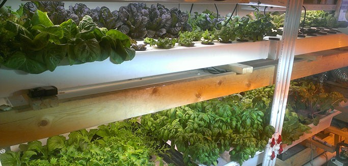 Nashville Entrepreneur Experiments with Micro-scale Rooftop Hydroponics