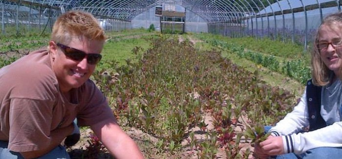 New Maryland Farmer Re-starts Successful Family Microgreen Business