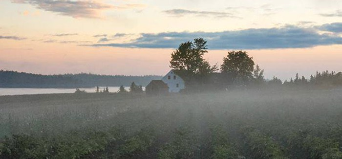Organic Farm Beats the Odds and the Weather off Coastal Maine