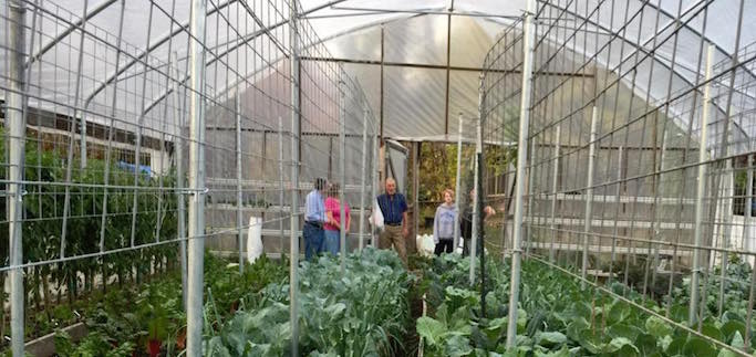 In Missouri, A Hobby Garden Gone Wild Evolves into Certified Organic Urban Farm