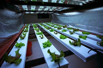 Hydroponic array inside of S&S Urban Acres operation. Photo Credit: Kreativ Studios.