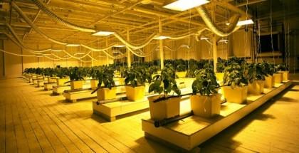 urban acres massachusetts hydroponic array