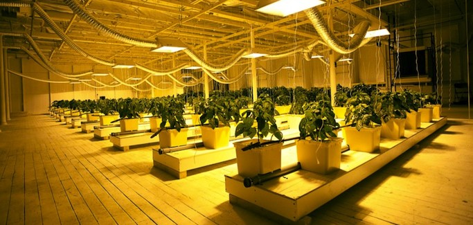 Hydroponic Urban Farm Provides Year-Round Supply of Healthy, Organic Produce to Massachusetts Mill Town