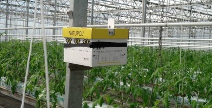 vanscoy featured image hydroponics