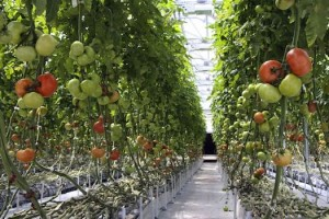 vertical+farming+system-1