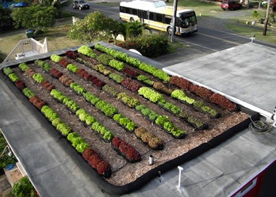 Rooftop farm in Waimanalo, Hawaii using FarmRoof technology. Photo Credit: FarmRoof