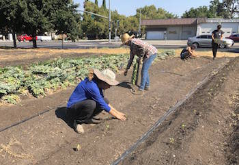The West Sacramento Urban Farming Program aims