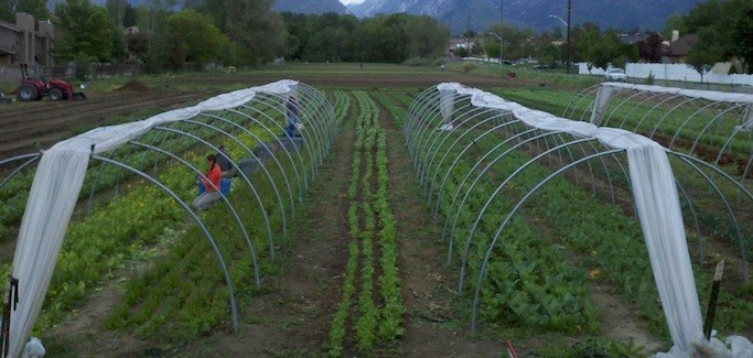 Growing Up and Out in Salt Lake County: Bell Organic, Draper, Utah