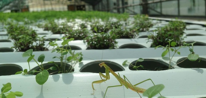 Radicle Farm's Aggregated Network of Hydroponic Greenhouses Offer Living Salads to Locavores