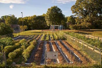 Beardsley Community Farm donates all of the food it produces to local pantries, kitchens and hunger relief organizations. It cultivates 10,000 pounds of produce a year. Photo courtesy of Bruce Cole Photography.