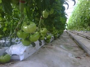 Photo Credit: Beylik Family Farms