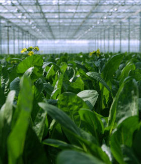 New York Man Rebounds from Manufacturing Layoff, Finds New Career in Hydroponic Farming