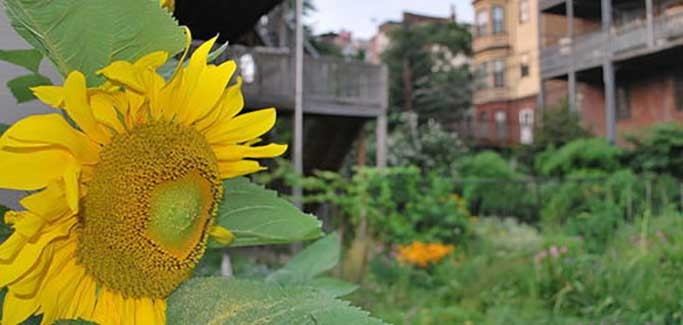 10 Cities Pushing the Bounds of Community Gardening