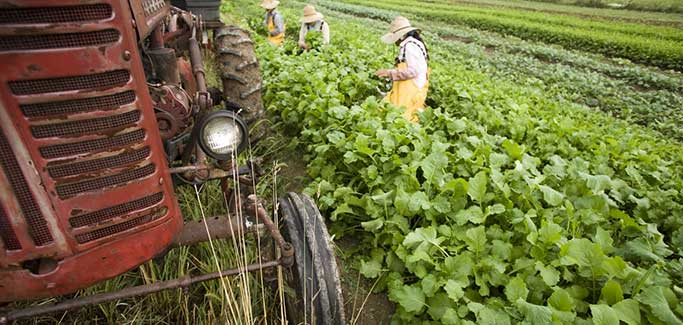 To Sustain Agriculture in Drought-plagued California, Look to Michigan's Developing Local Distribution Infrastructure