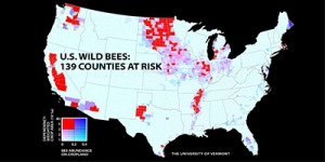 Map of counties facing an imbalance between wild bee abundance and pollinator-dependent crops. Courtesy: University of Vermont.