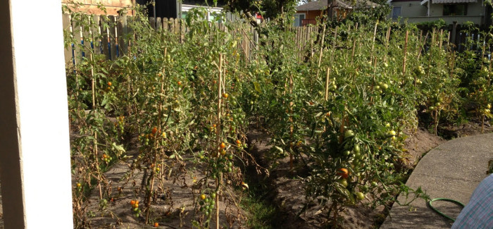 Tool Looks to Address Future Water Needs of Urban Agriculture Operations