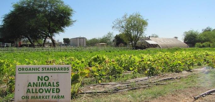 On Edge of Phoenix, Small-scale Farmer Seeks to Grow Local Food Movement