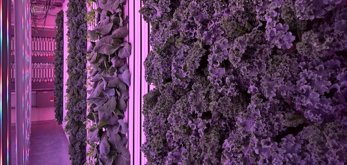 Early Adopter of Shipping Container Farming Opts to Build His Own