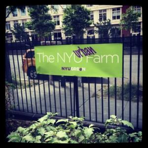 NYU Urban Farm Lab