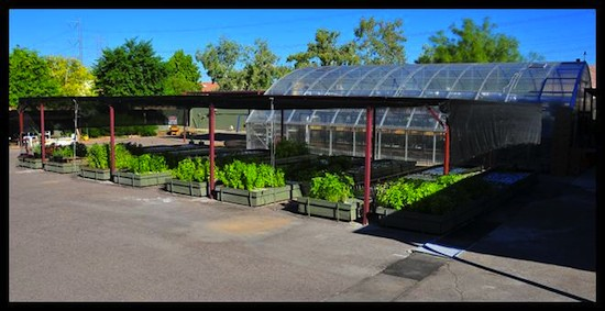 Rhiba Farms Aquaponics